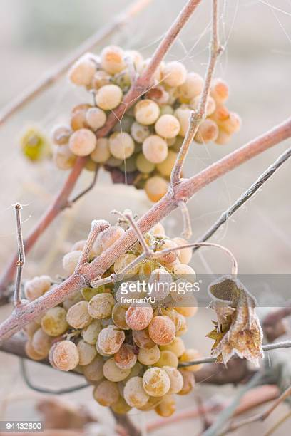 White grape covered by ice