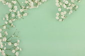 bouquets of a white gypsophila flower on a pale green background. top view. copy space. Holiday concept