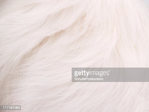 White Hair Background