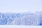 Biei's winter landscape