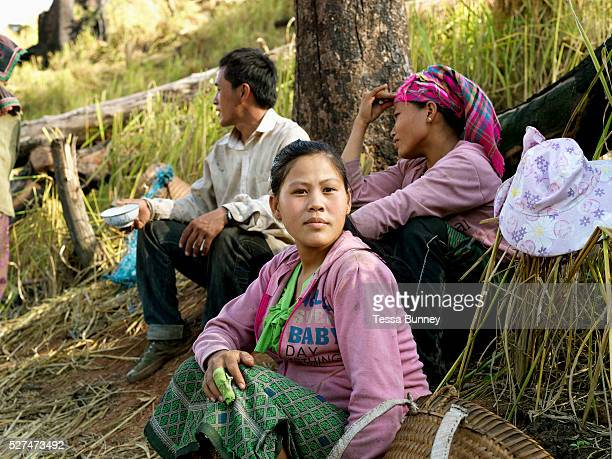 A White Hmong ethnic minority family take a break from collecting the harvested glutinous rice on an upland field Ban Hauywai Phongsaly province Lao...