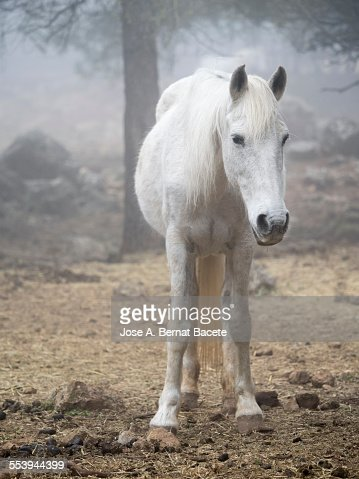 White horse between the fog