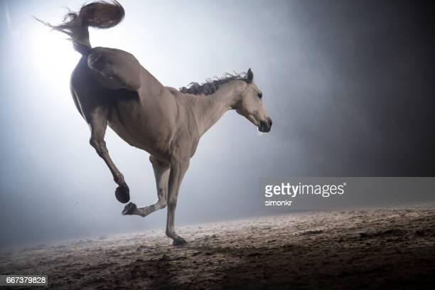 White horse bucking