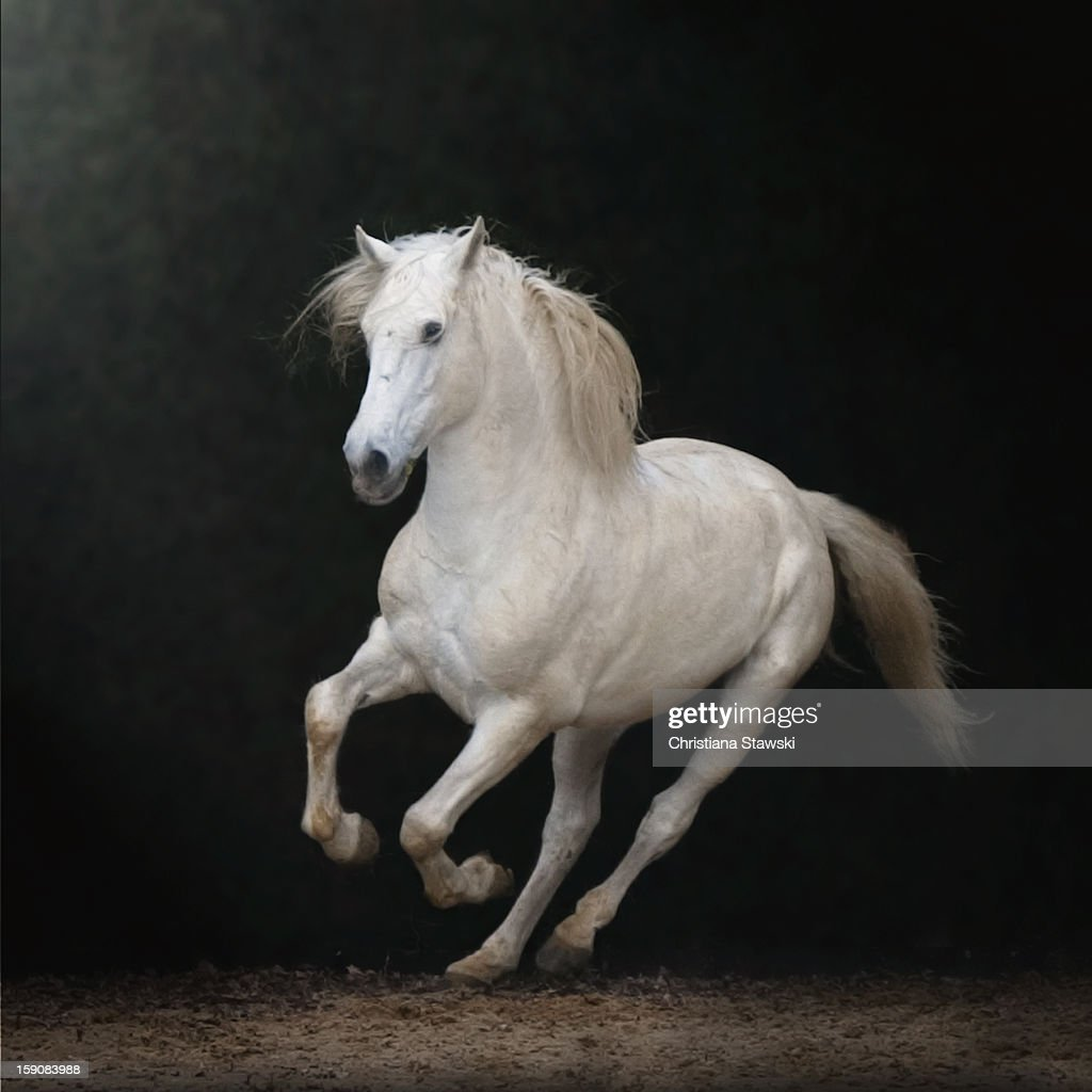 Galloping white horse - photo#22