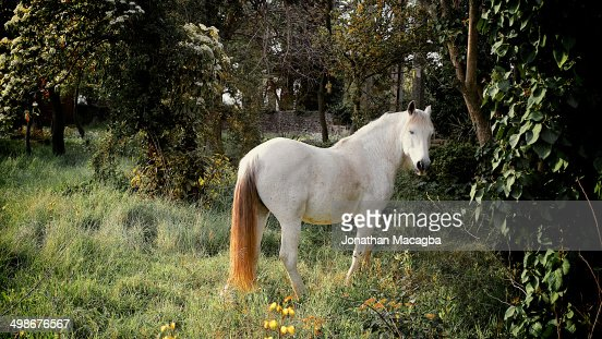 White horse in a forest clearing