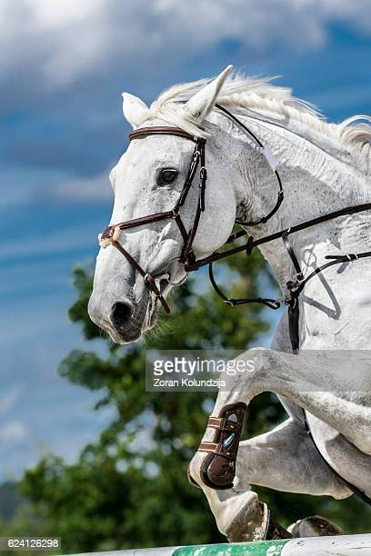 White horse jumping over hurdle