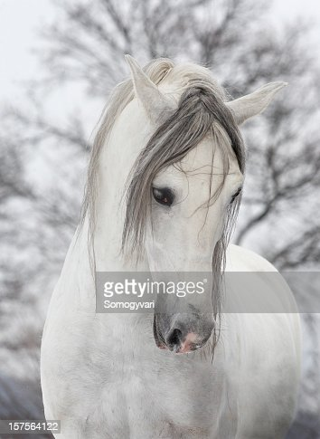 White horse looking sad on a winters day