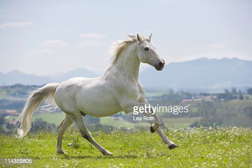 white horse running on meadow