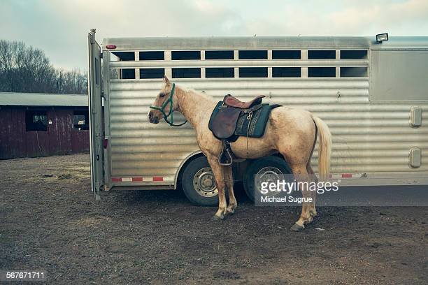 white horse standing next to trailer.