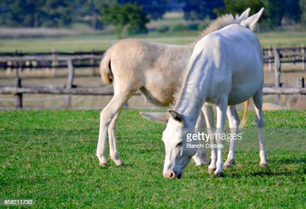 White horses in the field in summer