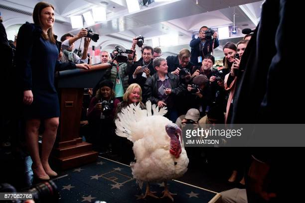 White House Press Secretary Sarah Sanders looks on as the press gets a sneak peak at the tobepardoned Thanksgiving turkey Wishbone in the press...