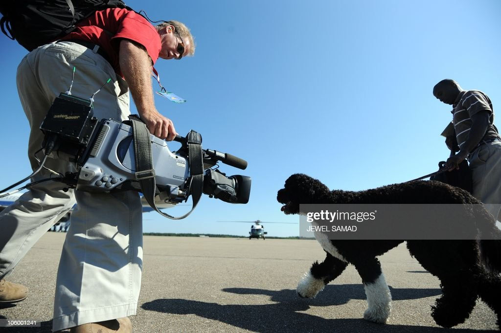 A White House staff brings Bo, the First Family dog, to board Force One at Cape Cod Coast Guard station, Massachusetts, on August 29, 2010. AFP PHOTO/Jewel Samad