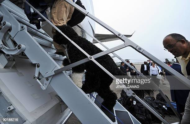 A White House staff takes the US First Family dog Bo on board the the Air Force One in Cape Cod on Martha's Vineyard Massachusetts on August 30 2009...