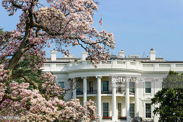 US White House with flowering magnolia tree Washington DC
