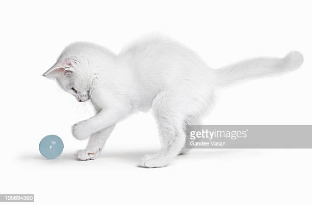 White Kitten playing with ball