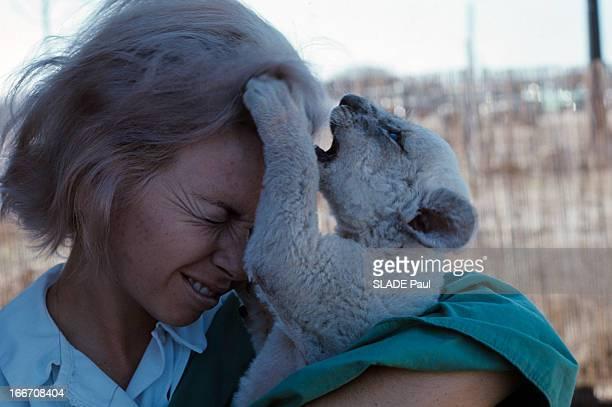 A White Lion At Palm Beach Zoo Au zoo de Palm Beach une employée tenant dans ses bras Lucky bébé lion au pelage blanc se faisant mordiller les cheveux