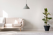 Grey lamp and ficus in beige settee with pillow and blanket in white living room interior with copy space