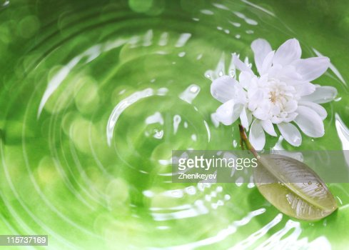 White lotus and leaf on rippling green background : Stock Photo