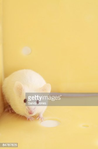 White Mouse and Cheese