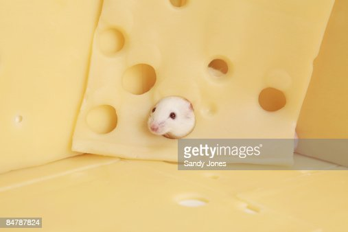 White Mouse in Cheese