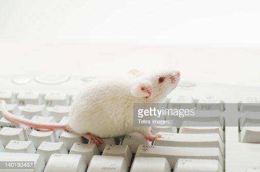 White mouse on computer keyboard, studio shot