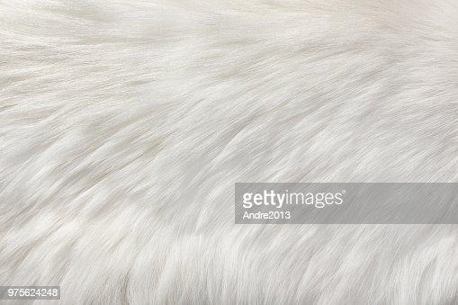 white natural fur background : Stock Photo