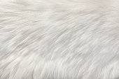 White fur natural texture, close-up.Useful as background