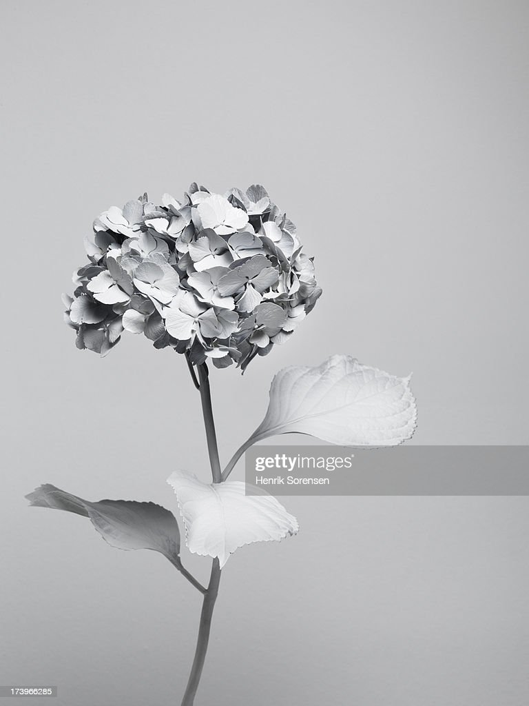 White nature : Stock Photo