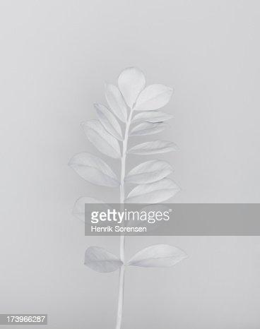 White nature : Stock Photo