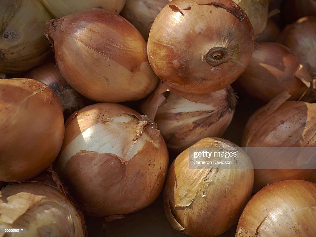 White Onions at Farmers Market : Stock Photo