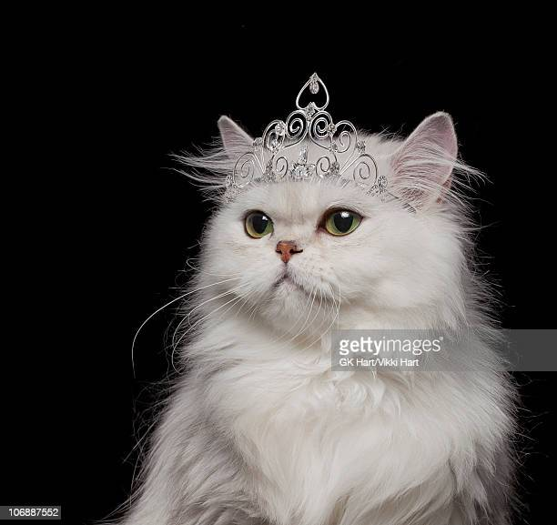 Persian Cat Stock Photos And Pictures Getty Images