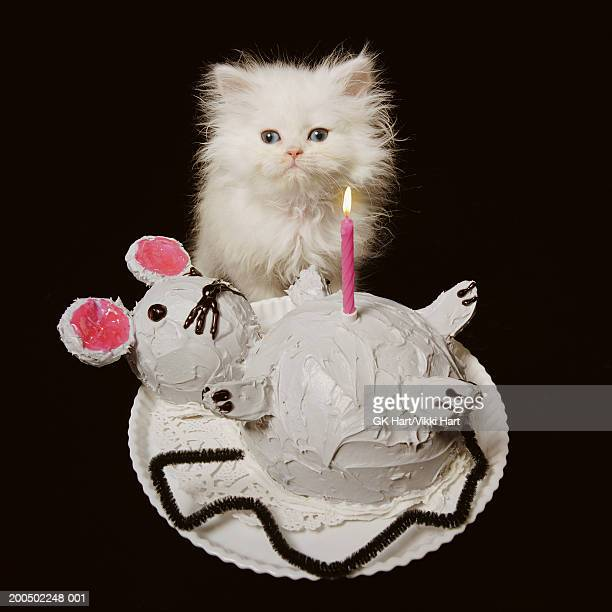 White Persian kitten behind 'mouse-shaped' birthday cake, portrait