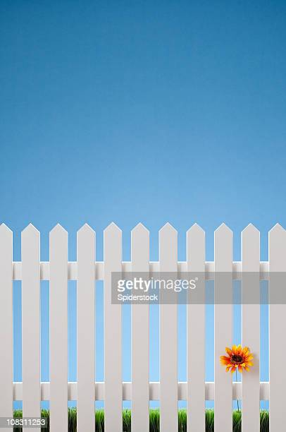 White Picket Fence With Single Flower