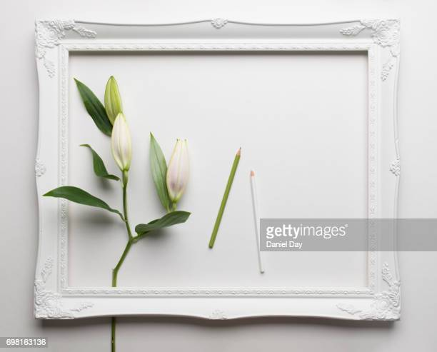 A white picture frame on a white background with white lilies coming into the frame on the left side with green and white pencil crayon