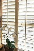 Detail shot of White plantation style wood Shutters
