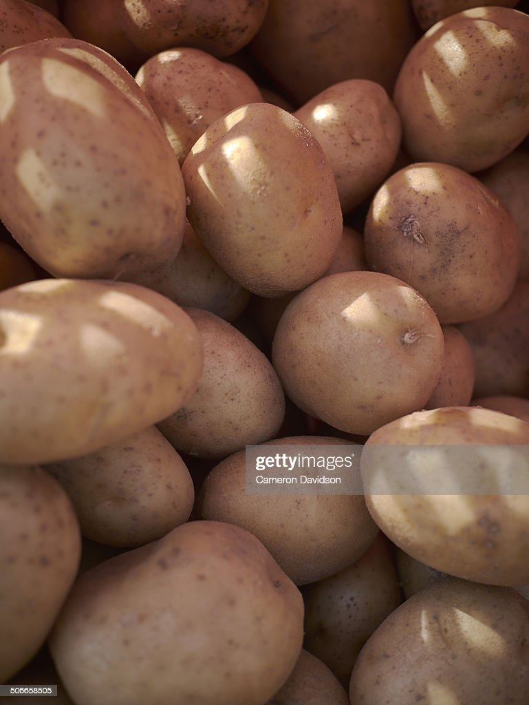 White Potatoes at Farmers Market : Stock Photo