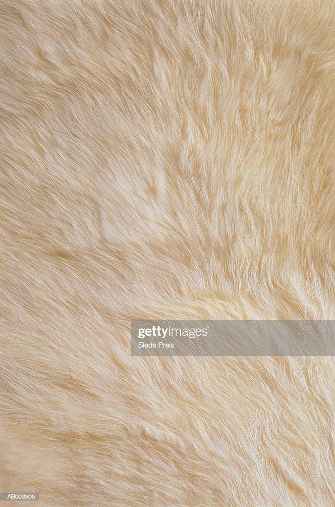White Rabbit Fur : Stock Photo