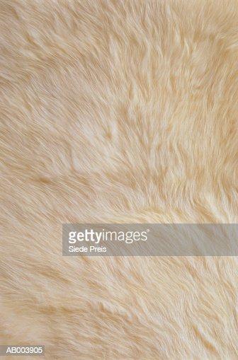 White Rabbit Fur