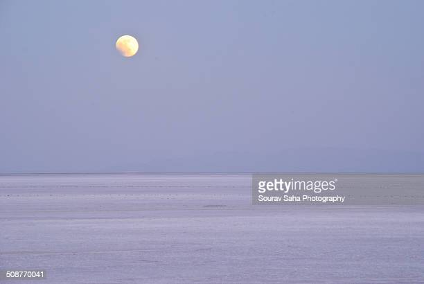 White Rann in Moonlight