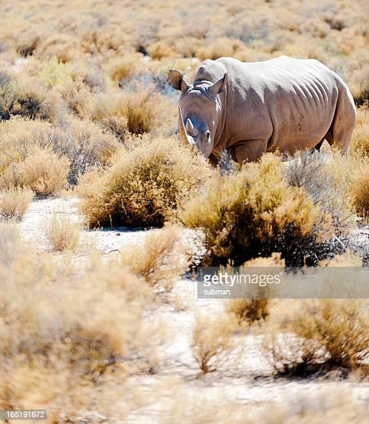 Blanco Rhino