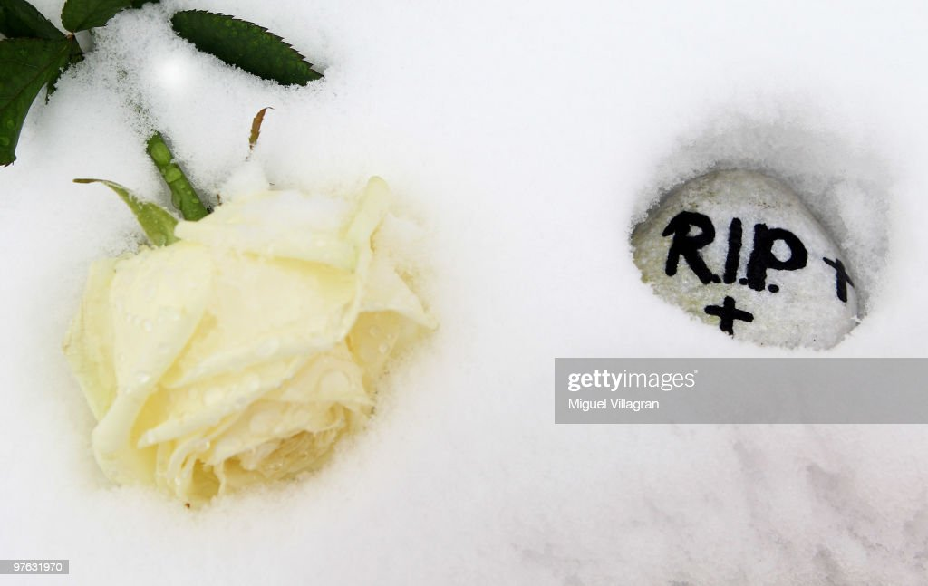 A white rose and a stone with the writing R.I.P. ('Rest in peace') are pictured close to the Albertville School on March 11, 2010 in Winnenden, Germany. Tim Kretschmer opened fire on teachers and pupils at his former school a year ago on March 11, 2009, killing 15 and leaving many more injured. Kretschmer fled the scene and shot himself dead after being cornered by police.