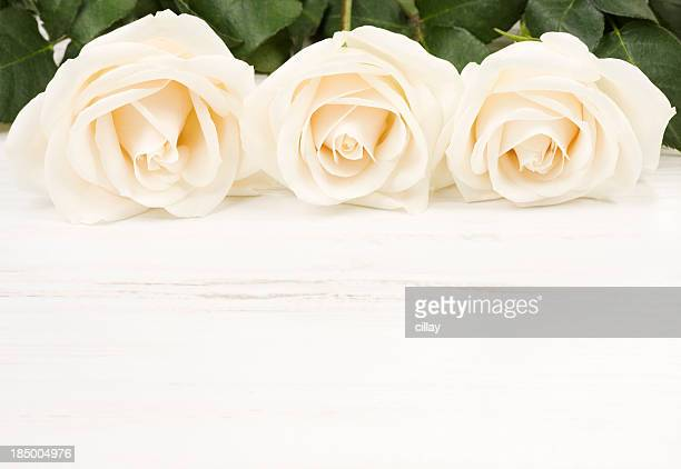 White Rose Border