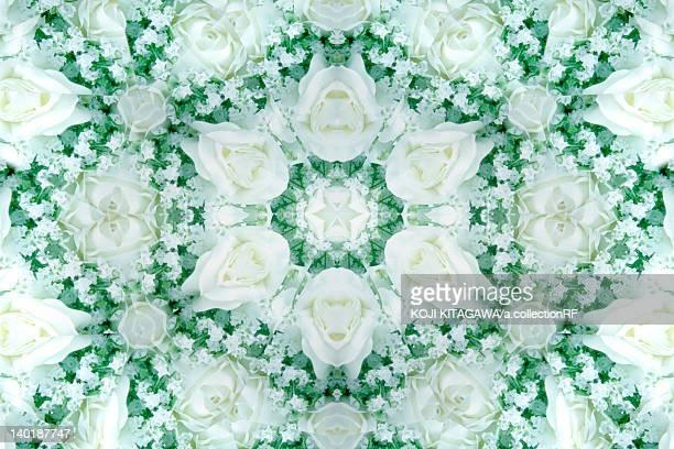 White rose Kaleidoscope