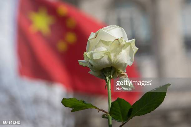 A white roses is shows during a people gather at Place de la Republique in Paris France on April 2 to mourn the death of Shaoyao Liu during a police...