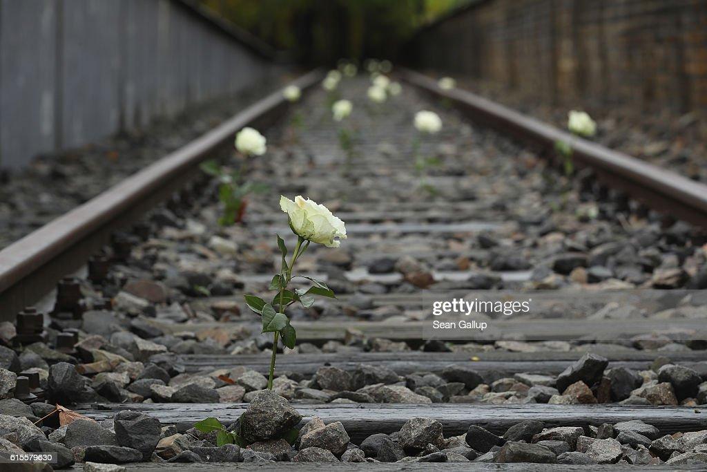 Image result for train track white rose