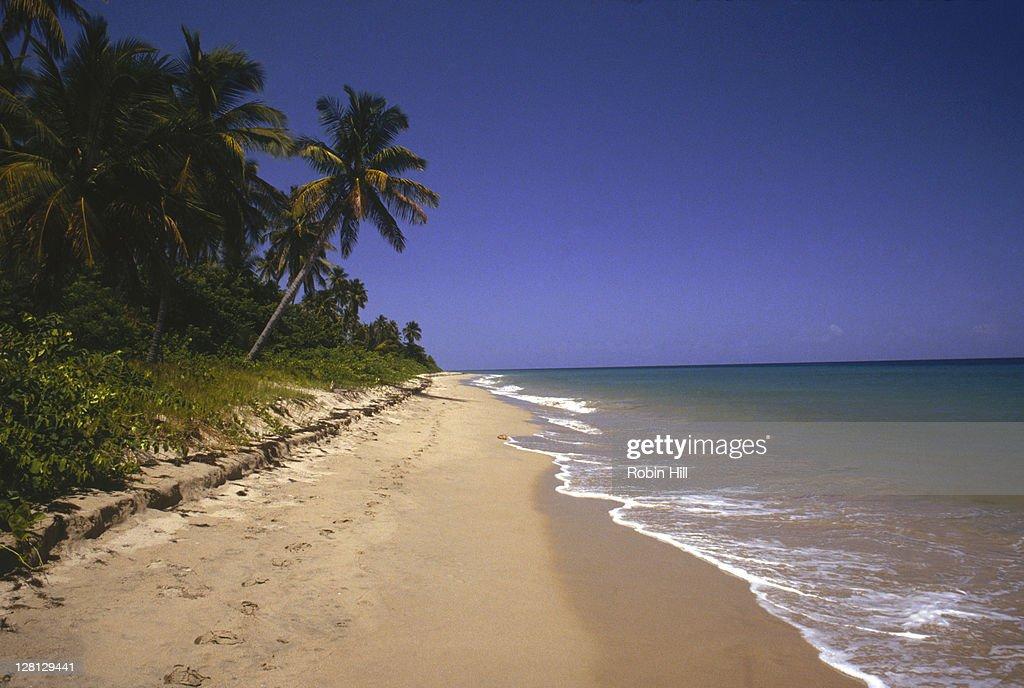 White sand at Pinney Beach, Nevis