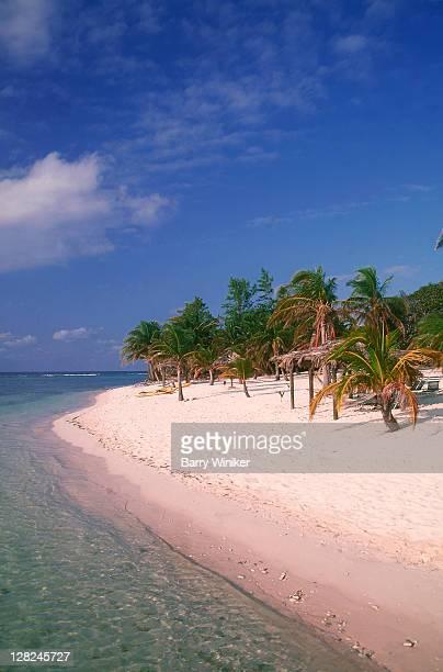 White sand beach with palm trees, Cayman Brac