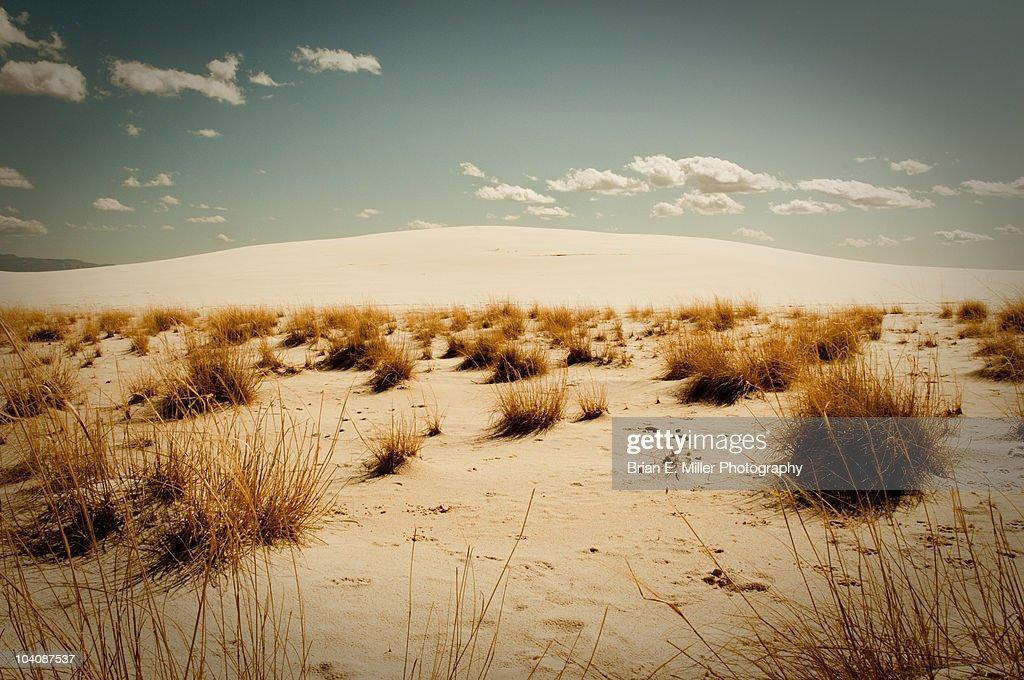 White sand dune under blue sky with desert brush : Stock Photo