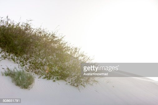 White Sands : Stock Photo