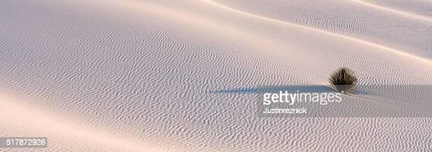 Yucca du désert de sable blanc Blanc Sables usine Panorama